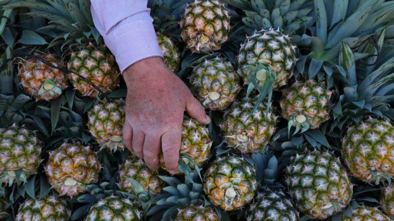 0a100d426df0 Ce cuir végétal à base de fibres d ananas pourrait révolutionner l industrie  textile et sauver la vie de milliers d animaux