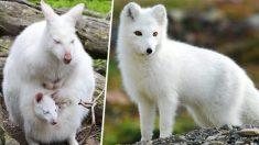 Ces animaux albinos sont d'une beauté exceptionnelle (photos)