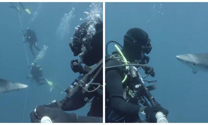 rencontre plongeur