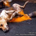 Indonésie: une vidéo de chiens abattus sur des marchés provoque l'émoi