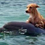 Un chien sauvé par des dauphins dans un canal en Floride
