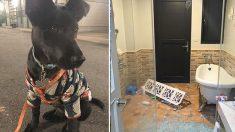 Une Taïwanaise gronde un chien parce qu'il hurle dans la nuit – quelques minutes plus tard, elle se rend compte qu'il lui a sauvé la vie