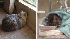 Si votre animal appuie sa tête contre le mur, ne l'ignorez pas, il pourrait s'agir d'un trouble neurologique