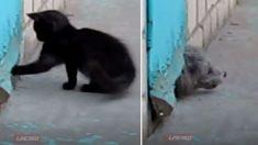 Ce chat gratte intensément un trou dans la porte. Mais ce qui sort n'est pas du tout ce que vous pensez