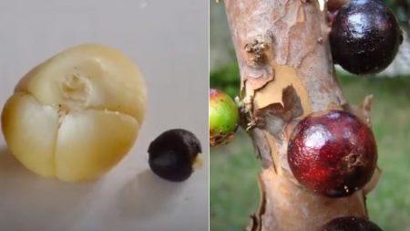 Les 10 fruits les plus bizarres dont vous n'aviez jamais, au grand jamais entendu parler – nous vous lançons le défi d'essayer le numéro 10