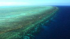 Australie: 40 millions d'euros débloqués contre l'étoile de mer dévoreuse de corail