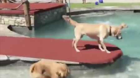 Ces chiens s'amusent comme des fous! En les voyant au parc, vous comprendrez pourquoi
