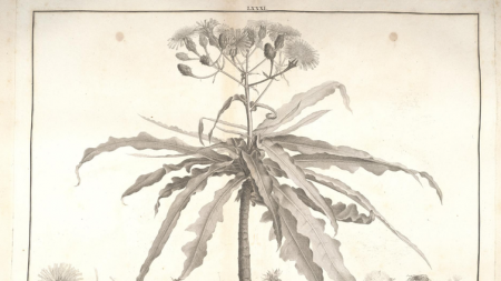 Sur les traces des botanistes oubliés: L'Héritier de Brutelle (1746-1800)