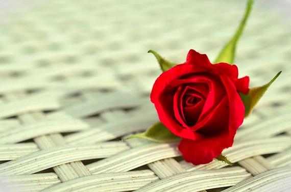 Saint-Valentin: offrir une  belle rose équitable