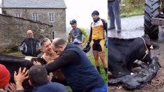 Un cycliste repère une vache enceinte qui agit bizarrement – après s'être arrêté, il arrache sa chemise et se met au travail
