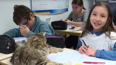 VAUCLUSE – Des chats à l'école pour apaiser les enfants et leur permettre de mieux se concentrer