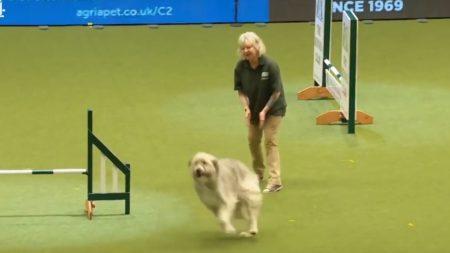 Débordé par la joie de vivre, ce chien autrefois maltraité n'en fait qu'à sa tête lors d'un concours – il fait rire tout le public!