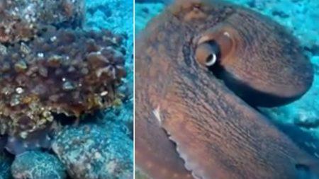 Un plongeur nage lentement vers un rocher, mais lorsque le rocher se transforme soudain, il commence une poursuite avec la caméra