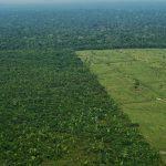 25 enfants et jeunes ont poursuivi l'État colombien à cause de la déforestation et ils ont gagné!