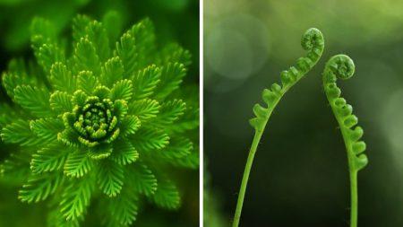 Les plantes peuvent prendre des décisions et apprendre: l'intelligence du monde végétal