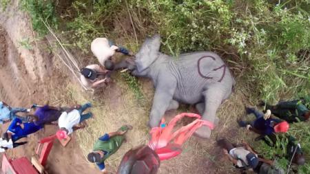 Un homme injecte un sédatif aux éléphants et les emmène – les êtres humains peuvent faire beaucoup pour les animaux