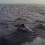 Une énorme migration est repérée au large des côtes de l'Afrique du Sud – c'est incroyable à voir