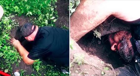 Une chienne creuse un trou pour protéger ses 11 chiots – mais quand il commence à pleuvoir, les sauveteurs doivent agir rapidement
