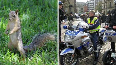 Un homme s'est senti menacé au point d'appeler la police: «Au secours, je suis poursuivi par un écureuil!»