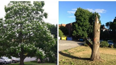 La triste réalité pour les arbres à un moment où nous en avons le plus besoin