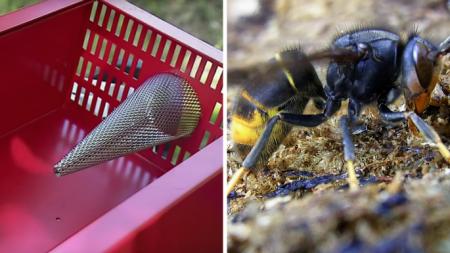 Maine-et-Loire: ce nouveau piège va devenir le cauchemar des frelons asiatiques
