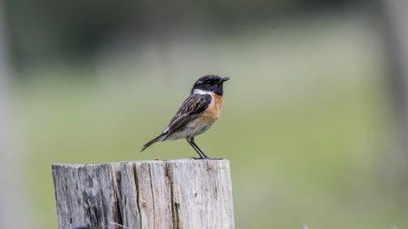 Les oiseaux de nos campagnes sont en danger – leur disparition inquiète