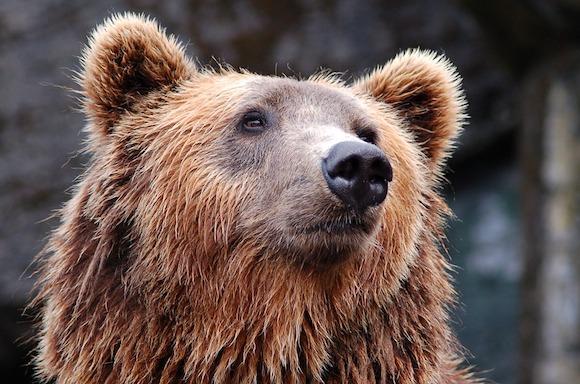 Pyrénées: des anti-ours dans la montagne pour tenter de les «effrayer»