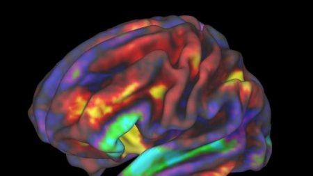Selon une étude: les enfants devant un écran pendant plus de 7 heures par jour ont une structure cérébrale différente
