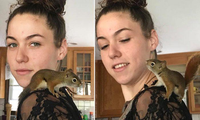 Un écureuil reconnaissant revient pour dire «merci» à la jeune femme qui l'a sauvé
