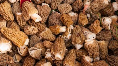 Une femme meurt après avoir mangé des champignons «toxiques» dans un restaurant étoilé Michelin