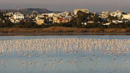 Chypre: baisse record de la chasse aux oiseaux