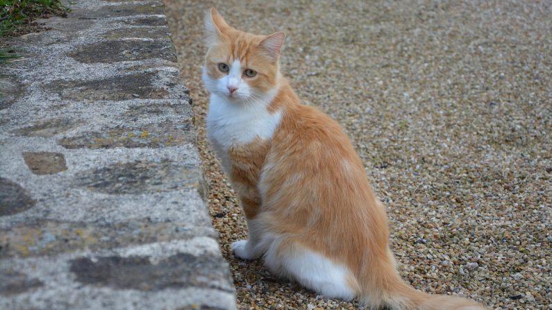 Isère– Un chat grièvement blessé par une flèche de 88 centimètres: «Il s'agit forcément d'un acte volontaire»