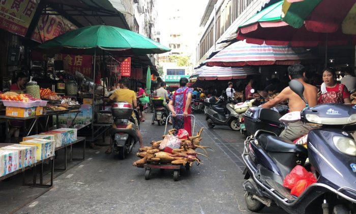 Du «chien grillé vivant»: la maltraitance animale en Chine atteint de nouveaux sommets